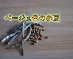 ベージュ色 小豆